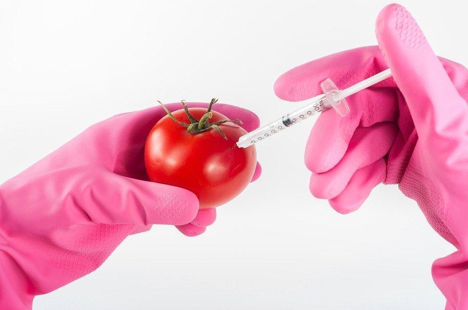 Продукты с ГМО в Евросоюзе должны продаваться со специальной маркировкой — решение суда