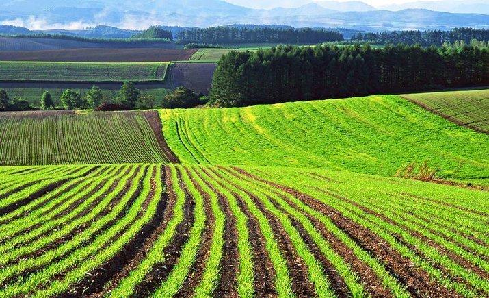 Две трети украинцев против продажи земли — соцопрос